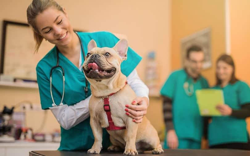 Veterinerlik Maaşları, Veteriner Hekim Maaşları 2021